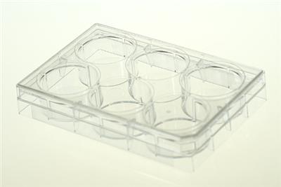 6孔细胞培养板,平底,未TC