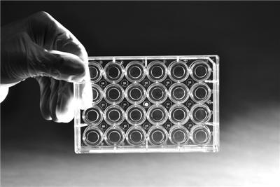 φ10mm的24孔玻底培养板