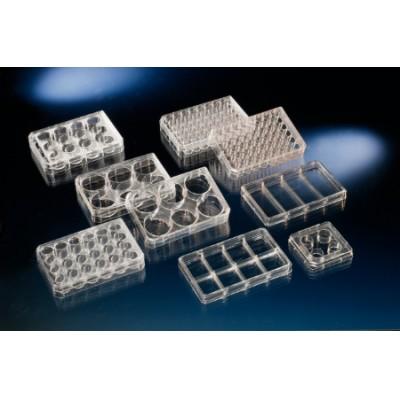多孔细胞培养板,经细胞培养处理